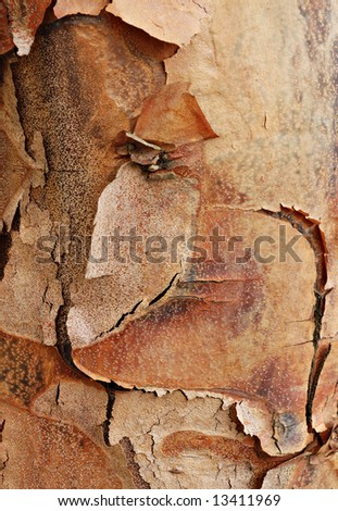Beautifully detailed tree bark of a paperbark maple tree. Close-up image useful as background texture. - stock photo