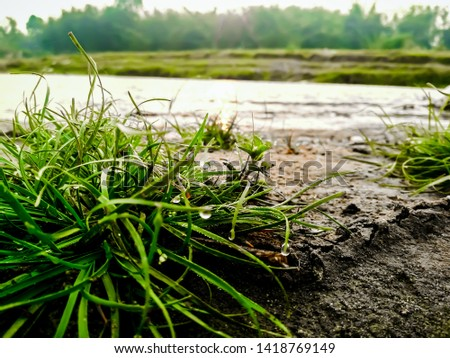 Beautifully portrayed pic  of water droplets on grass alongside a river bank under a clear sky