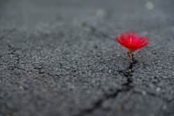 beautifully resilient flower growing out of dark crack in asphalt