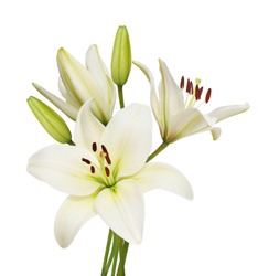 Beautifult lily flowers isolated on white background.