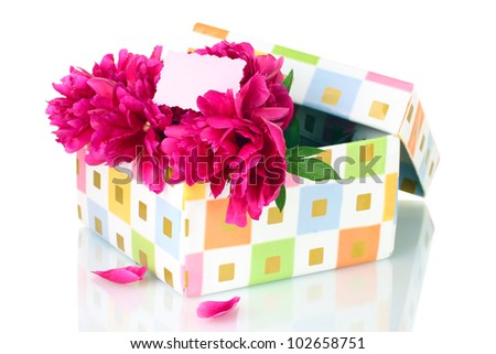 beautirul pink peonies in gift box isolated on white