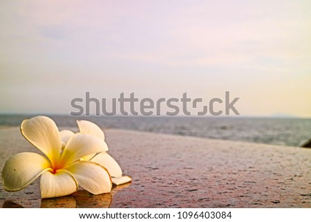 beauty blossom on granite floor at seaside in close up style so impressive pattern for outdoor background