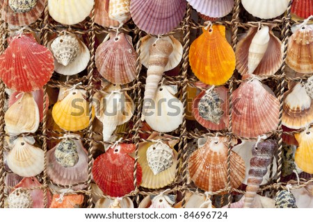 Beauty colorful shells background. Montenegro. Summery day.