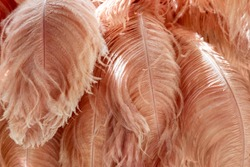 Beauty details of ostrich feathers,Dyed the feathers into brown.