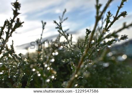beauty dew drops #1229547586
