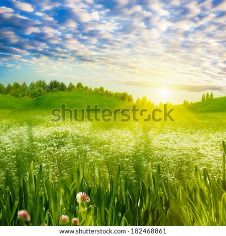 Beauty evening on the meadow, abstract summer landscape #182468861