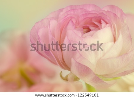beauty flower holiday card background