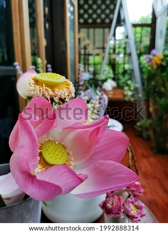 Beautyful pink Lotus in the vase.