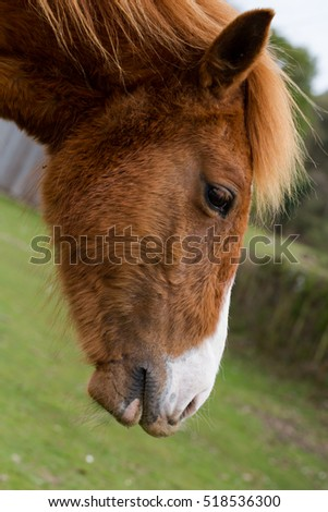 Close-up of thoroughbred horse on a ranch with beautiful
