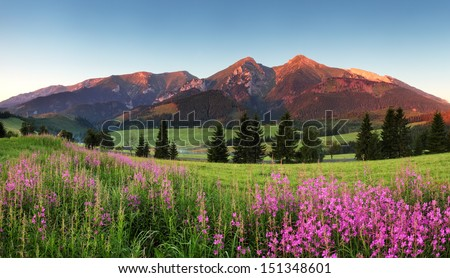 Beauty mountain panorama with flowers - Belianske Tatry