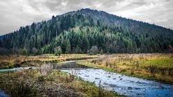 Beauty nature forest landscape