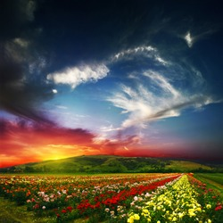 beauty of colorful nature