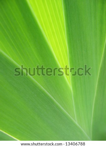 Beauty of leaf texture
