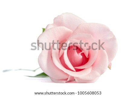 Isolated Against Sky Wall Clock Pink Flower 3D Rose Close Up of Morning Glory Purple