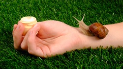 beauty, skin care cosmetics with snail mucin, moisturizer cream in hand with snail on green grass close-up.