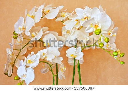 beauty white orchid flower