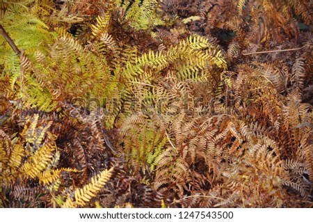 Beautyful background with yellow, dried ferns leaves. Wallpaper with autumn ferns leaves. #1247543500