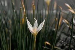 Beautyful flower flora whiteflower wildflower