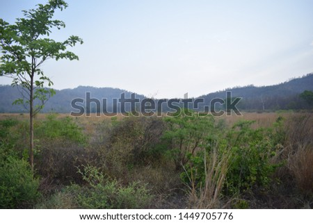 beautyful landscape pic in forest