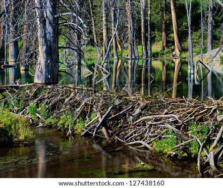 Beaver Dam and Pond, Eastern Sierra, California