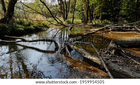 Beaver dam and trees fallen because of beavers activity on Ropa river in Beskid Niski, Poland, Europe. Zdjęcia stock ©