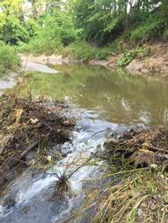 Beaver dam obstructing natural flow of creek creek
