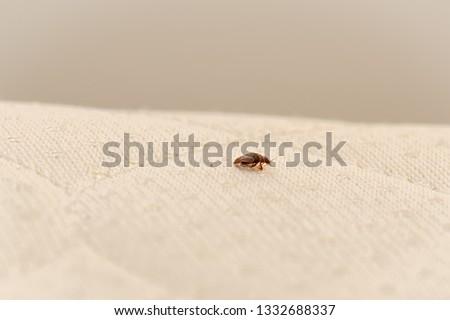 Bed Bug on a Mattress #1332688337