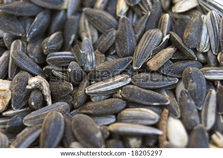 Bed of sunflower seeds - stock photo