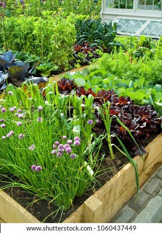 Bed with vegetables at garden