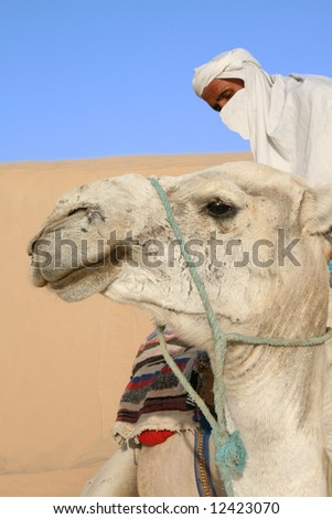 Bedouin prepares his camel for the ride