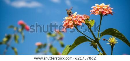 Bee Stock photo ©