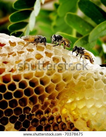 bee and honeycomb on background