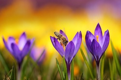 bee and spring