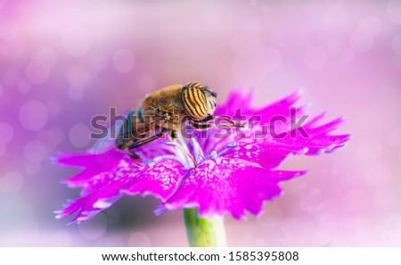 bee catching pollen on a flower