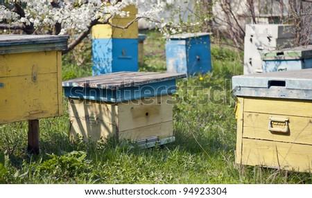 bee clues in the spring meadow garden