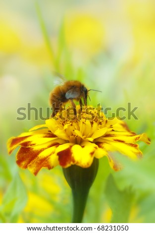 Bee collecting honey on flower