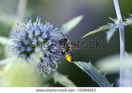 Bee Collecting Pollen from Flower