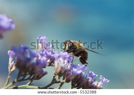 Bee does his work on a violet flower.