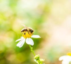bee eat pollen of flower
