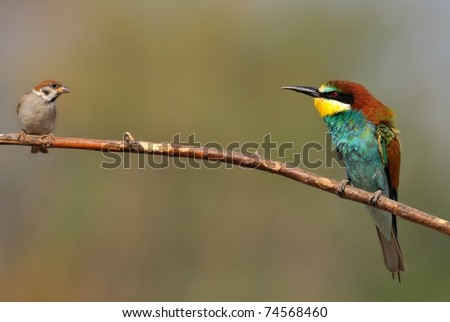 bee eater and small bird on a twig