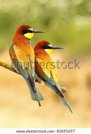 Bee-eater in a de-focused innkeeper natural