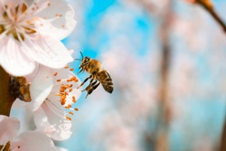 Bee flying, bee on the flower,