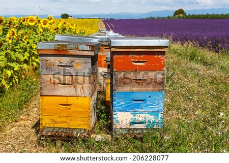 Bee hives on lavender fields, near Valensole, Provence. France