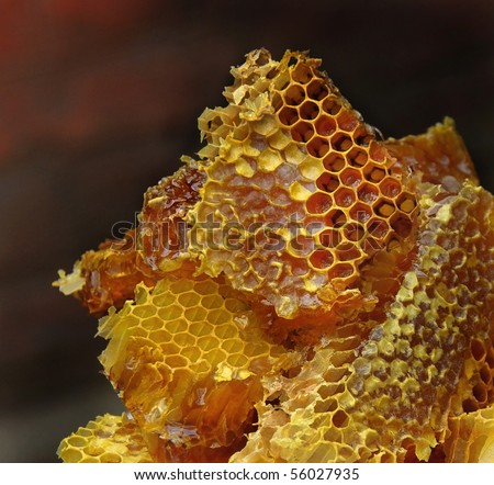 Bee honeycombs wax with honey. Wild Honey is the most useful and delicious natural product.