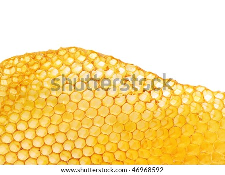 bee honeycombs wax without honey isolated on a white background