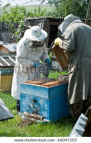 Bee-keepers collect honey - stock photo