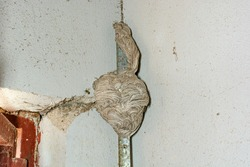 Bee nest built in wall crack