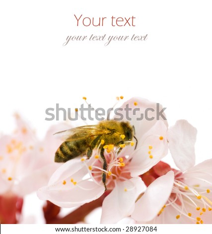 Bee on a flower.Studio isolated