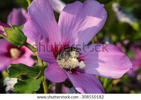 Bee on flower #308550182