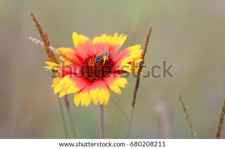 bee on nice summer flower  #680208211